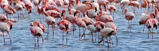 Flamingo Conservation