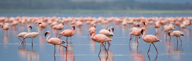 Flamingos in Culture
