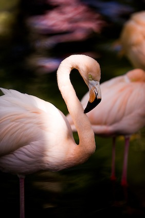 datos_flamingos_424