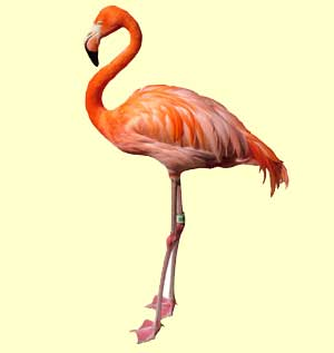 top flamingo facts