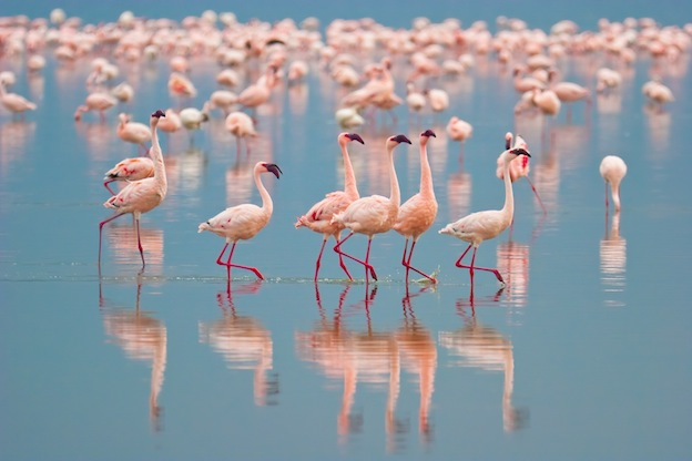 Flamingo Habitat and Distribution