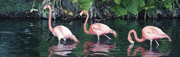 Flamingos and Humans