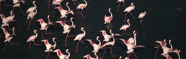 Flamingo Pictures