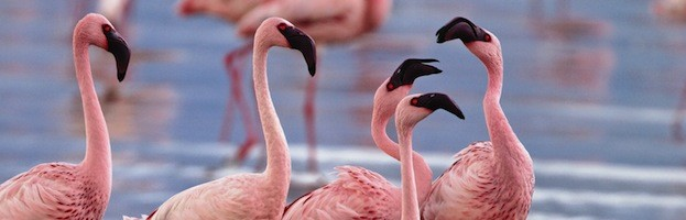 Flamingo Social Structure